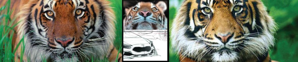 Kia Tiger Nose Grille